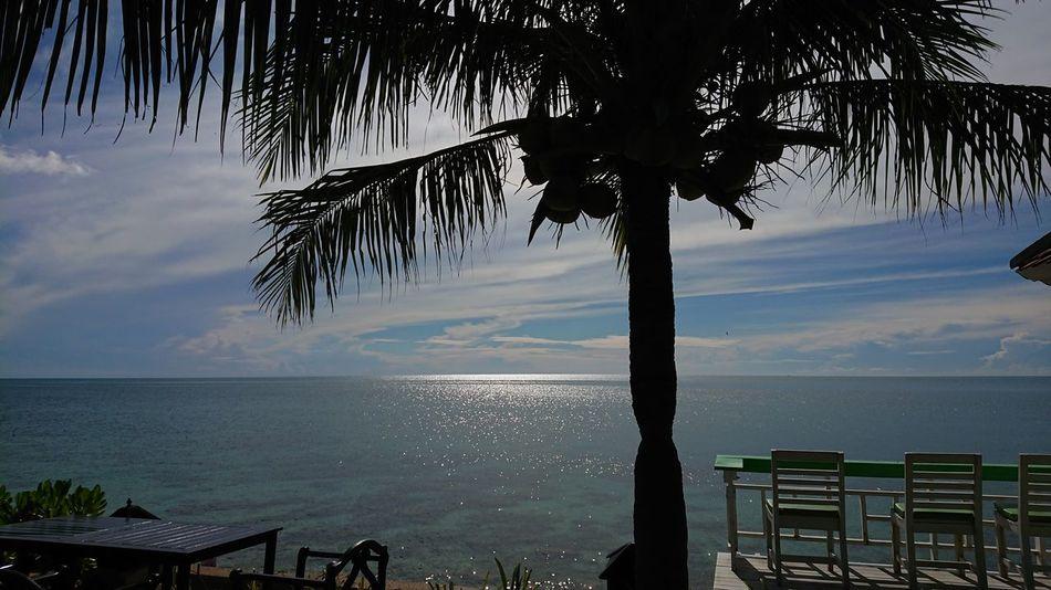 Sea Beach Tree Travel Nature Sky Palm Tree Kosamui Thailand Coconut