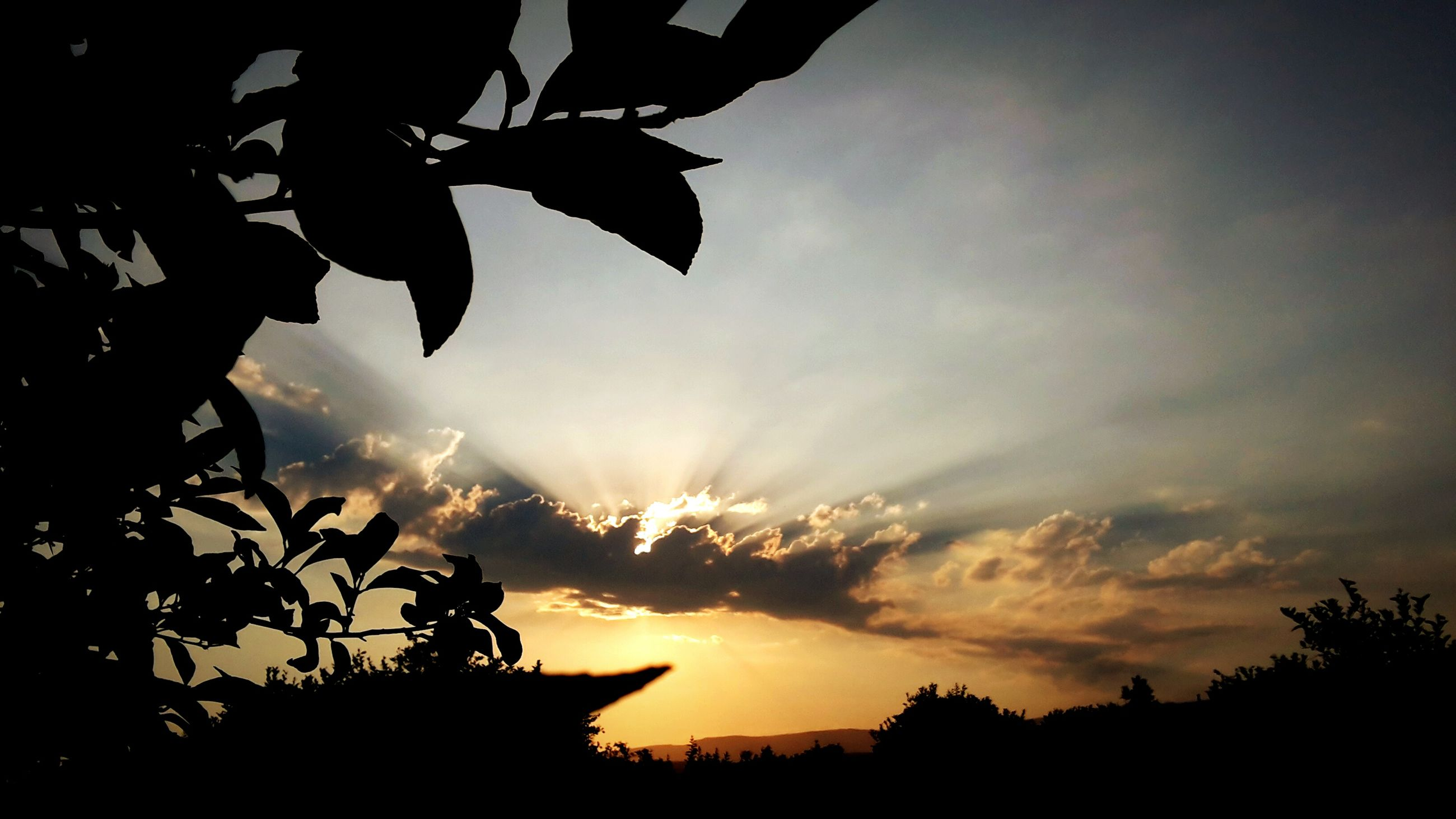 silhouette, sunset, tree, beauty in nature, sun, nature, sky, scenics, growth, no people, tranquil scene, tranquility, low angle view, outdoors