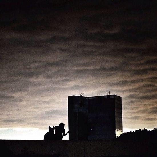 Dog Silhouette NEM Clouds