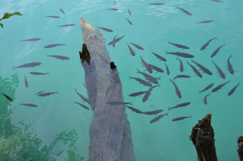 High angle view of fishes swimming in lake