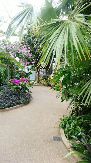 Green House Botanical Garden Plants And Flowers Plants EyeEm Nature Lover Botanical Gardens Plants 🌱 Chlorophyll Botanical Flowers Sunlight Palm Tree