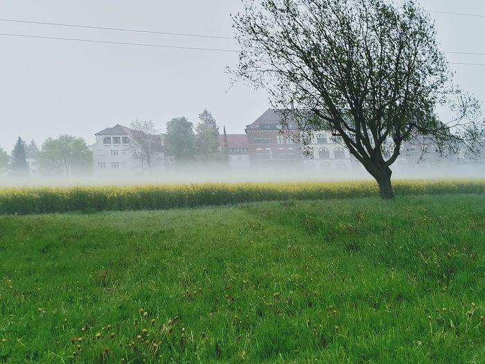 Nebel Kloster Kloster Siessen Fog Raps