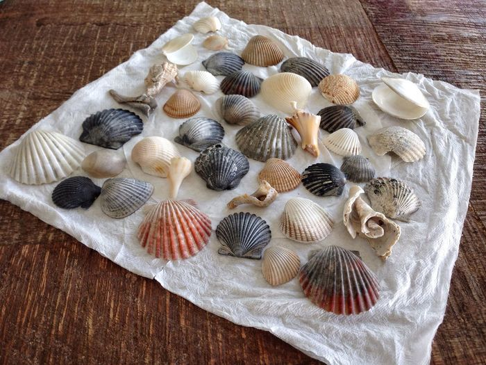 Close-up of seashells on tissue paper