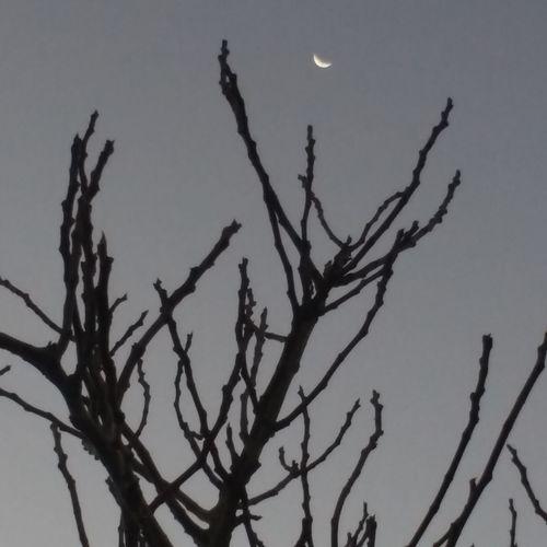 Moon Luna Noche Noches🌙 Night árbol Arboles , Naturaleza Tree Trees Overnight Success Monochrome Photograhy Sin Filtro Sin Filtro Chile Sinfiltro Sin Filtros TakeoverContrast Perspectives On Nature Black And White Friday