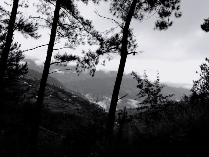 Pine Road Black And White Forest Mountain Mountain Range Serenity Sky Cloud Road To Nowhere Lost Camping Cold Temperature Cold Cold Days Tree Tree Area Forest Sky Pine Woodland Evergreen Tree Forest Fire Treetop WoodLand Spruce Tree Pine Tree Foggy Tree Trunk Branch Tranquil Scene Tranquility Woods