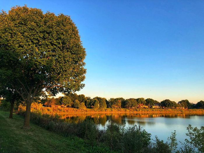 Beautiful horizon Blue Sky Horizon Over Water Plant Tree Sky Beauty In Nature Tranquility Growth Nature Tranquil Scene Water No People Scenics - Nature Clear Sky Day Outdoors Lake Copy Space Idyllic Sunlight Green Color