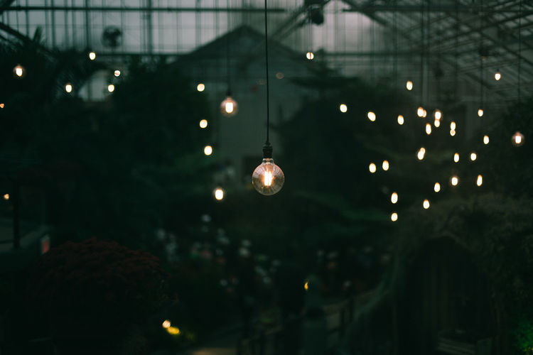 Lightbulbs hanging in a green house