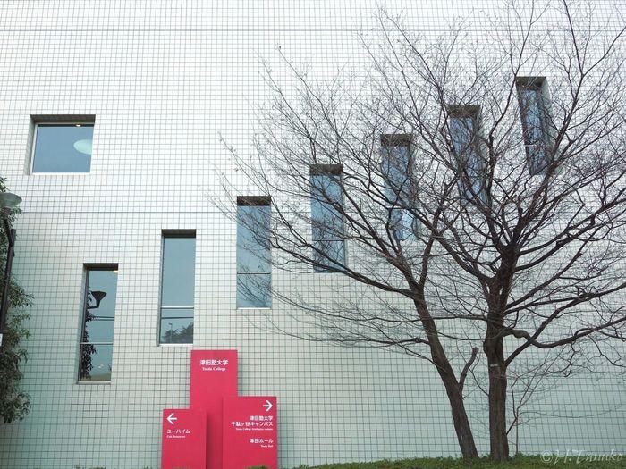 Wall Simplicity Urban Geometry