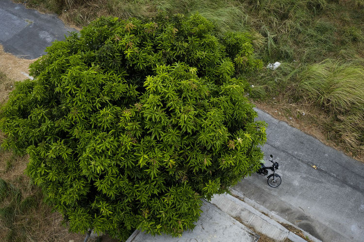 Beauty In Nature Bicycle City Day Green Color Growth High Angle View Incidental People Land Vehicle Men Mode Of Transportation Motorcycle Nature Outdoors Plant Real People Road Transportation Travel Tree