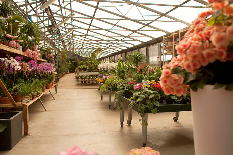 Adult Adults Only Agriculture Beauty In Nature Botanical Garden Business Business Finance And Industry Florist Flower Flower Shop Freshness Gardening Green Color Greenhouse Growth Indoors  Market Multi Colored Nature People Plant Plant Nursery Potted Plant Retail  Store