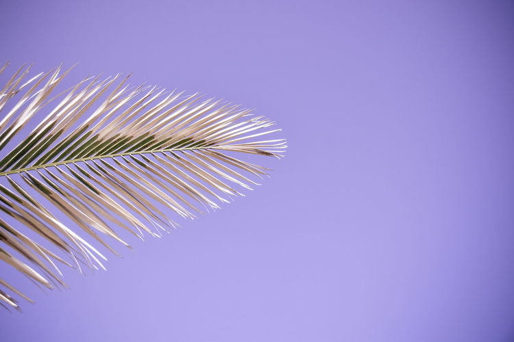 Close-up of leaf against purple background