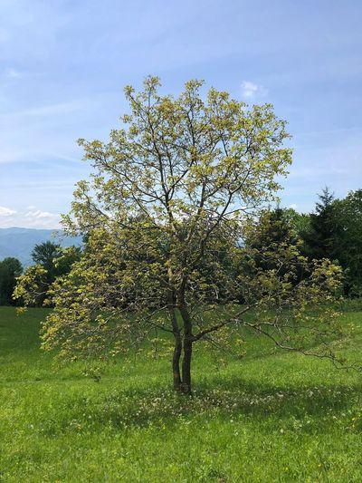 One tree Nature