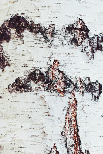 Full frame shot of weathered tree trunk