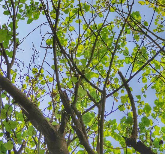 Treetop Growing