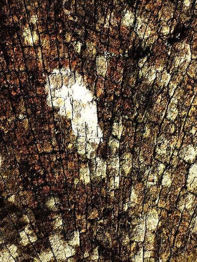 Textures And Surfaces Wood Natural Beauty Nature Countryside
