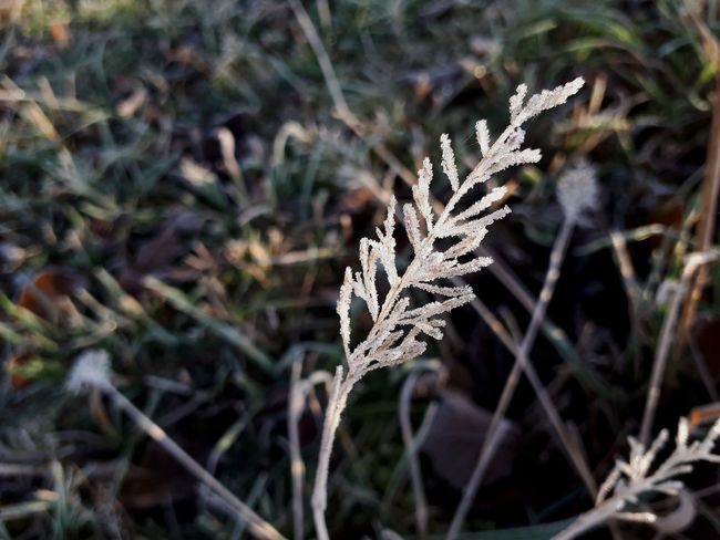 Snow Cold Temperature Winter Frozen Close-up Plant Frost Ice Crystal Weather Condition Icicle Cold Ice