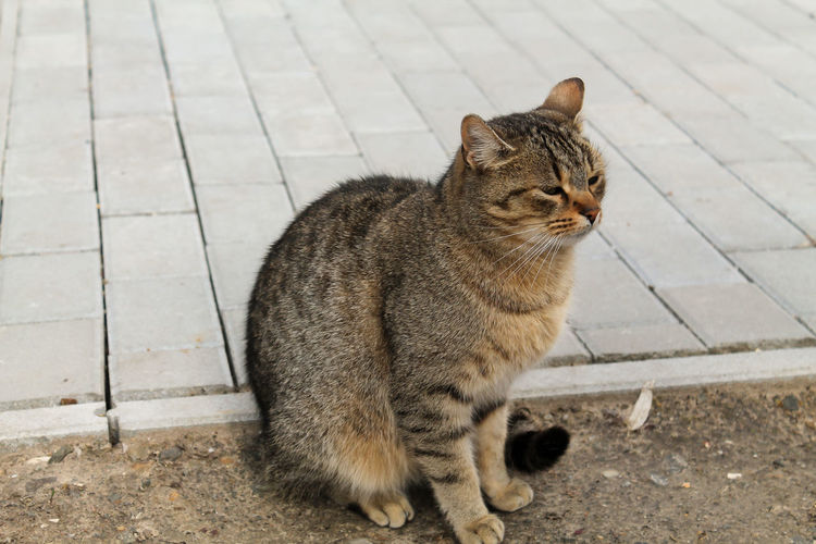 Cat with