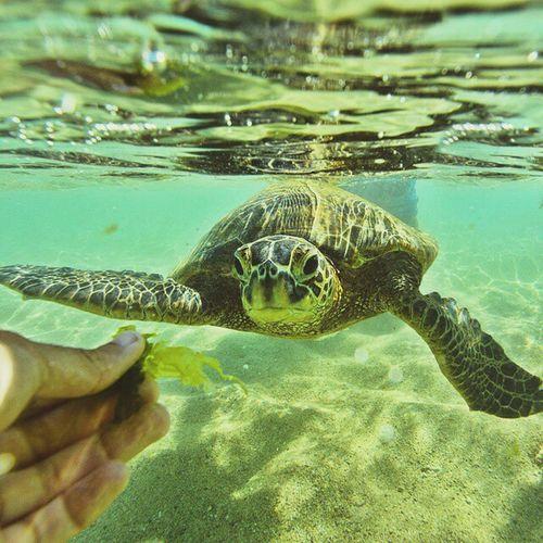 Gopro Seaturtle Ocean