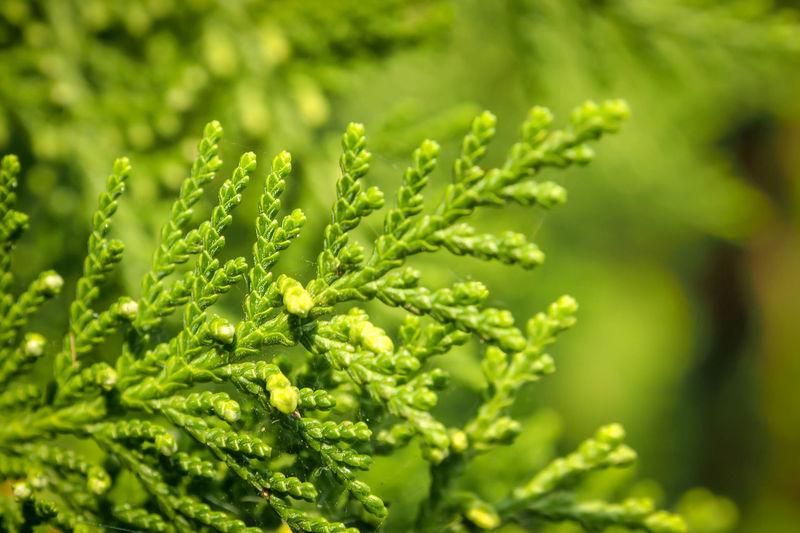 green leaf on