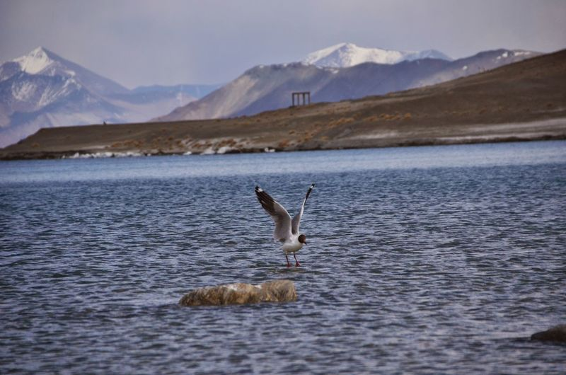 Bird in lake against mountain range