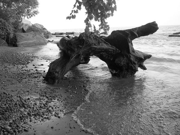 Fallen Warrior ~ Beach Beauty In Nature Day Horizon Over Water Lake Erie Nature No People Ontario Outdoors Sand Scenics Sea Sky Tranquility Tree Tree Trunk Tree Trunk, Tree, Fallen Tree Water