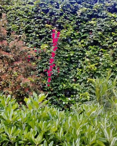 Rose🌹 Verde Colori Natura Bellezza Profumo