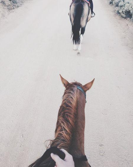 Horse Relaxing Beautiful Day Bigbear