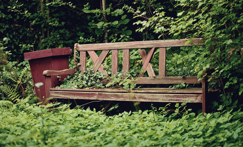 Faded seat Abandoned Beauty In Nature Bench Day Faded Garden Green Green Color Growth Nature No People Old Old Wood Outdoors Overgrown Plant Rots Seat Seattle Srping Toruism Travel Tree Vintage Wood - Material
