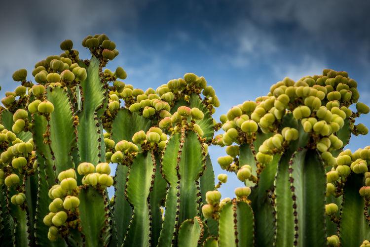 Close-up of succulent plant against sky