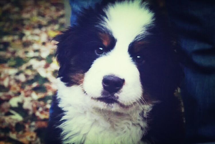 Puppy Named After Trent Reznor (Reznor - Oct 2011)