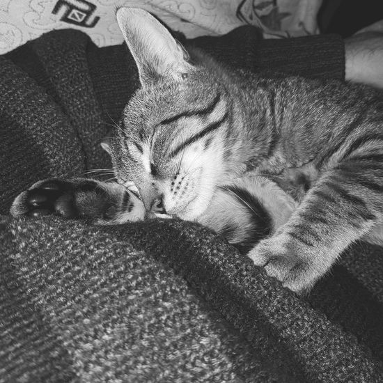 Note8 Animal Cat Manavgat Blackandwhite Instagram Note8photography Note 8 Antalya Pets Onur.mertt2 Indoors  High Angle View One Person Human Body Part Pets Day Animal Themes