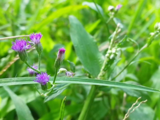 flower Flower Insect Nature Plant Animals In The Wild Purple Outdoors