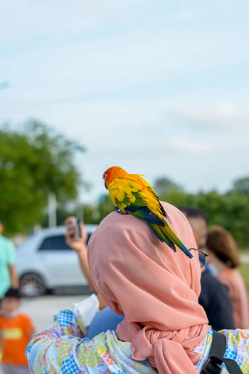 View of a bird on car