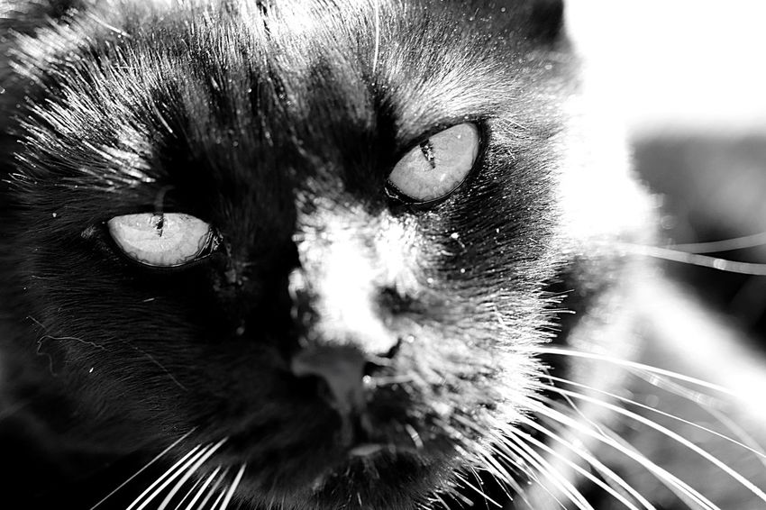 EyeEm Selects Cat Pets Domestic Cat One Animal Domestic Domestic Animals No People Animal Head  Whisker Mammal Animal Themes Animal Feline Eye Portrait Vertebrate Animal Body Part Close-up Looking At Camera