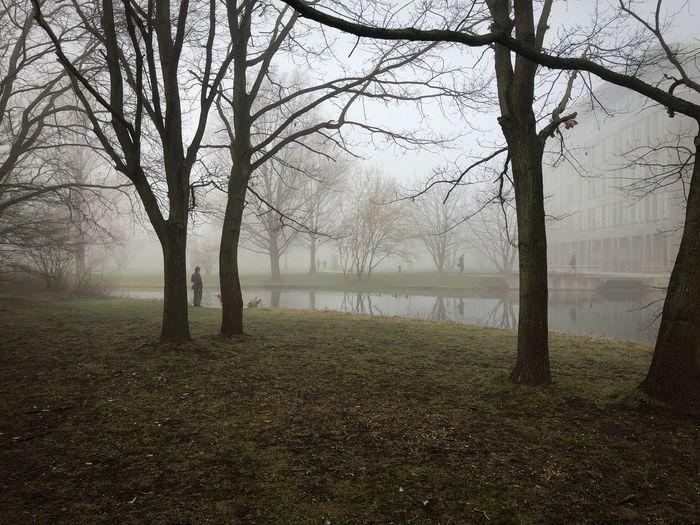 Im Nebel Fog