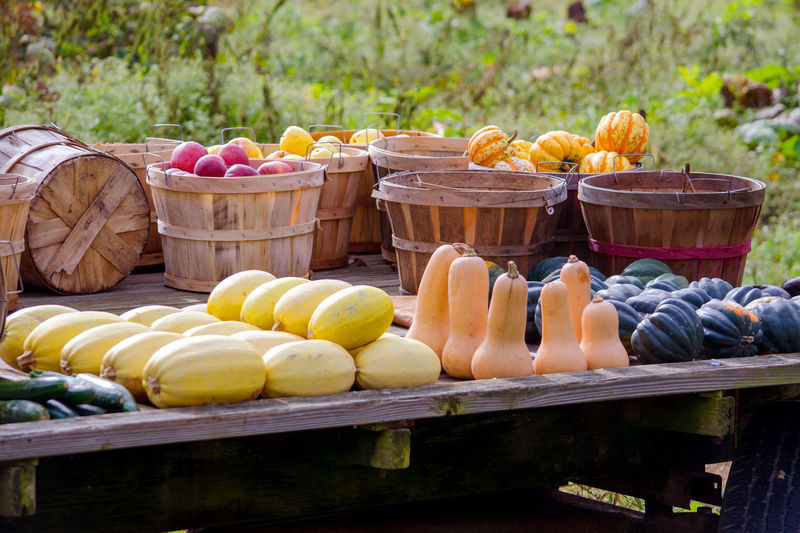 Beautiful fall harvest for sale at a local farm, with squash, gourds, apples, pumpkins and zucchini