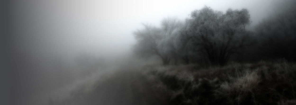 Fog Tree Nature Winter No People Outdoors Day Landscape Beauty In Nature Fog In The Forest Fog In The Woods