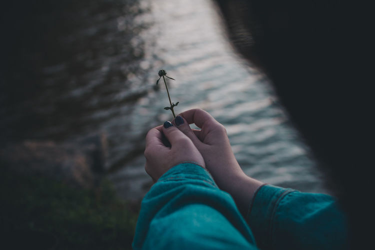 Cropped hands of woman holding flower over lake