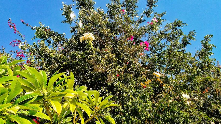 Growth Nature Low Angle View Tree Beauty In Nature Flower No People Freshness Green Color Day Plant Sky Outdoors Branch Fragility Close-up Egyptphotography Streetphotography Clear Sky Scenics Beauty In Nature Tranquility Nature Full Length Vacations