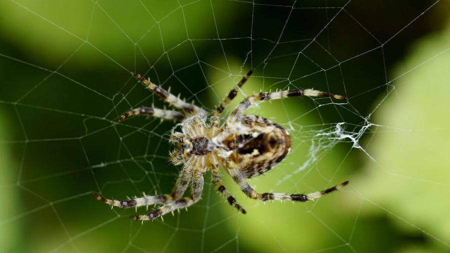 9987 Arachnid