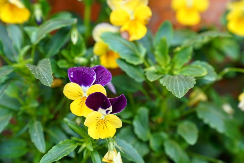 Flower Petal Fragility Beauty In Nature Growth Nature Freshness Flower Head Plant Purple Blooming Yellow Focus On Foreground Leaf Green Color