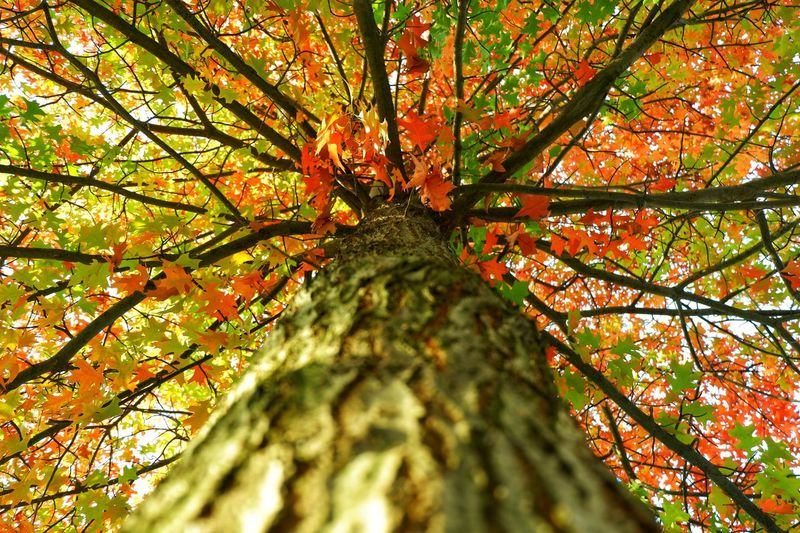 the view under Tree Branch Leaf Autumn Tree Trunk Flower Beauty Forest