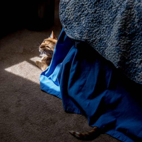 High Angle View Of Cat Covered With Blue Blanket On Rug