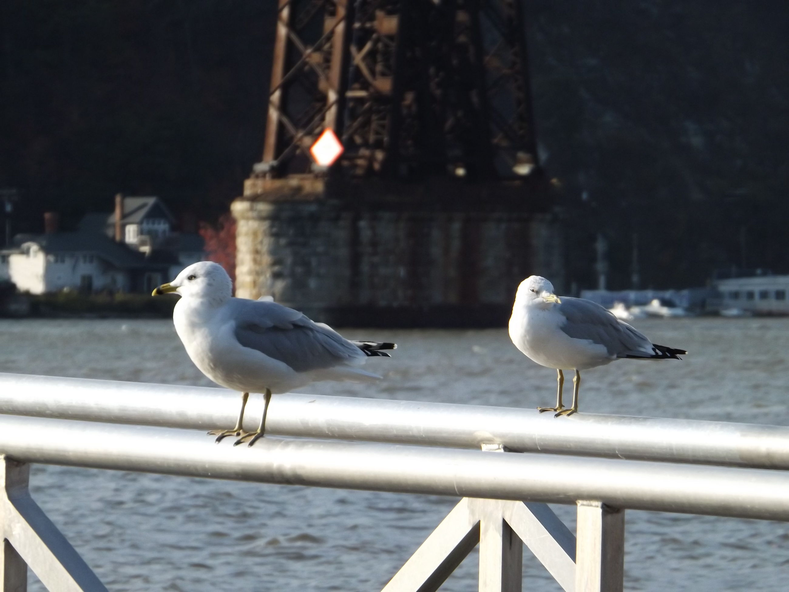 bird, animal themes, animals in the wild, seagull, wildlife, perching, railing, pigeon, focus on foreground, one animal, building exterior, spread wings, built structure, full length, flying, two animals, outdoors, architecture, city, retaining wall