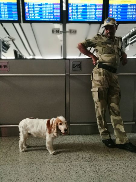 Dog Indoors  Pets Policedog Indianpolice Airport Security