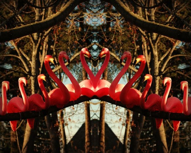 row of plastic flamingos in a tree - mirrored Birds Of A Feather Birds On A Wire Flamingo Pink Flamingos Row Of Birds Birds In Trees Birds On A Branch Flamingos Mirror Reflection Plastic Flamingos Symmetry