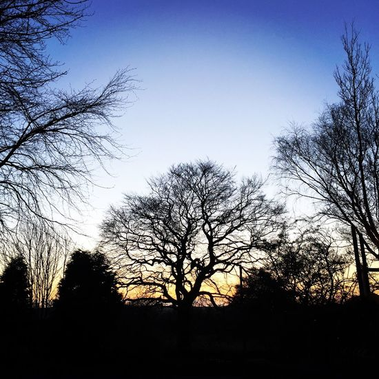 Let's Do It Chic! Sunset Trees Sky Skyporn Blue Sky Blue