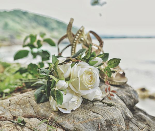 the bouquet Bouquet Rose - Flower Flower Flower Head My Best Photo Photography White White Background Rock - Object Rock Summer Beach Sea Fishing Net Close-up Animal Themes Rosé Blooming Bunch Of Flowers Hibiscus Coral Colored Single Rose Single Flower