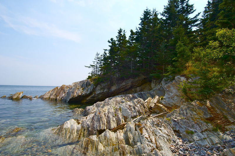 Grand Manan Island New Brunswick, Canada New Brunswick Seashore Beauty In Nature Day Grand Manan Growth Idyllic Land Nature No People Non-urban Scene Outdoors Plant Rock Rocky Coastline Scenics - Nature Sea Sky Tranquil Scene Tranquility Tree Water