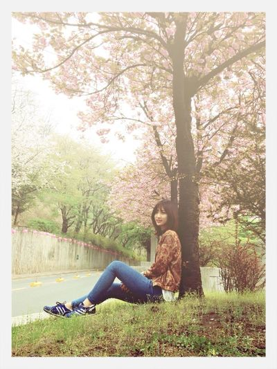 Enjoying Life Taking Photos That's Me Cherry Blossoms ><예당에서